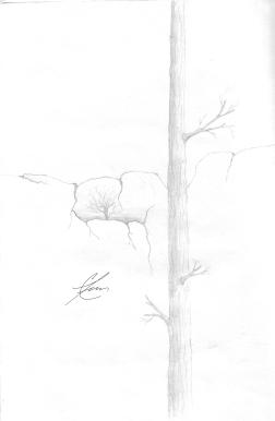 CliffTrees.sig